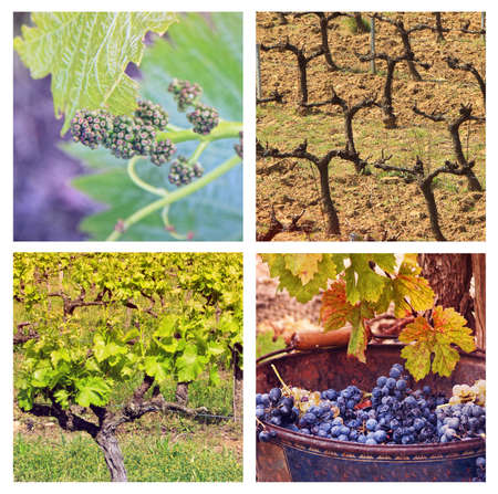 Four Seasons In Provence  collage with 4 photos of vineyards ib different seasons