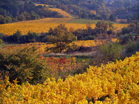 Vineyard Landscape in autumn, Provence, France photo