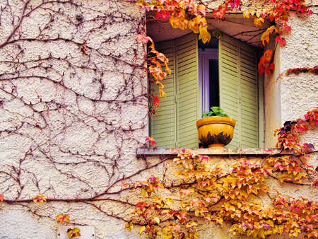 autumn background from colourful leaves at the wall photo
