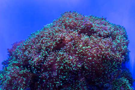 Sea anemone 版權商用圖片