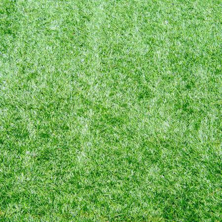 Artificial Grass photo