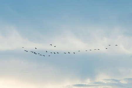Bird flying in a sky