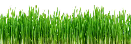 Seamless fresh spring green grass isolated on � white background Stock Photo