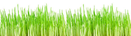 Seamless fresh spring green grass isolated on � white background