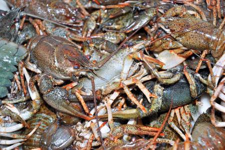 Live crawfish before cooking, boiling. Fresh crawfish background.