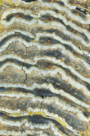 Texture of Mammoth tooth. Closeup view.