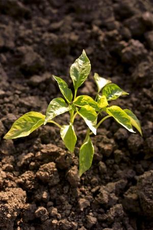 equitable: plant ecology concept