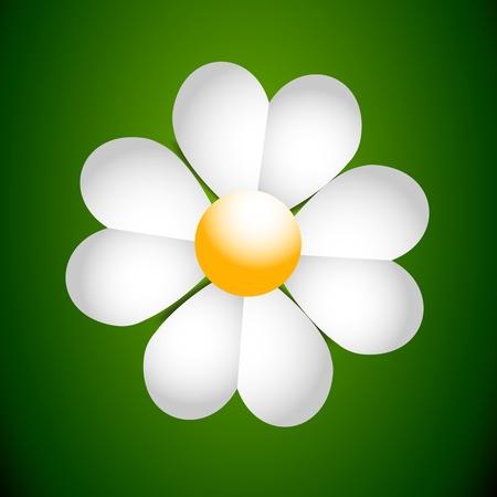 camomiles macro: Daisy
