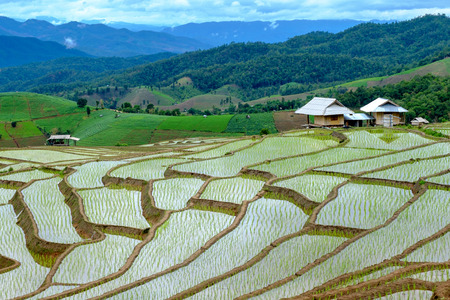 Landscape of rice field in the north of Thailand. Reklamní fotografie