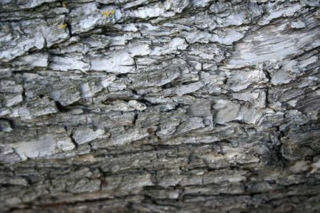 cortex: horizontal fragment and texture cortex old tree