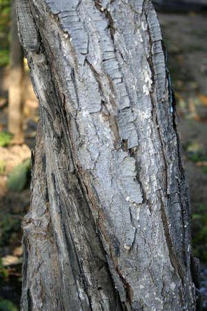 cortex: cortex old tree Stock Photo