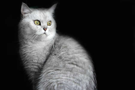 complacent: abstract scene rest complacent cat Stock Photo