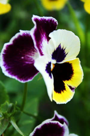 manner: garden decoration in the manner of varicoloured flower