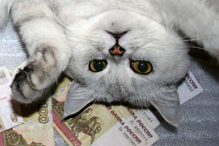 complacent: scene by complacent life sulphur home cat and money bills Stock Photo