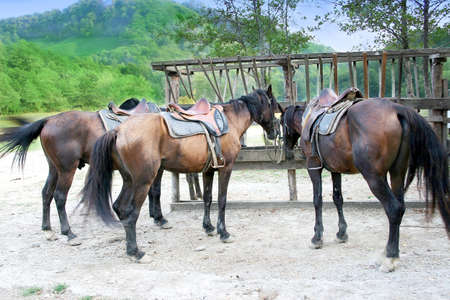 pet horses before walk on mountain photo