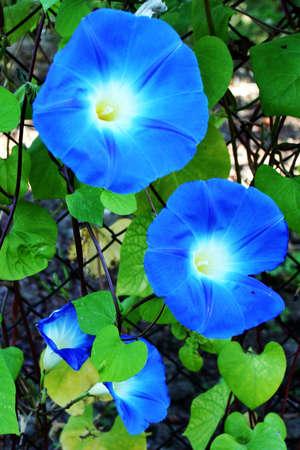 flowerses: beautiful garden flowerses year solar daytime