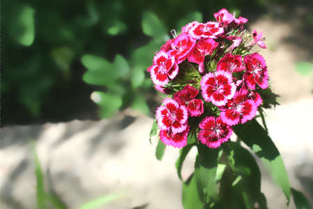 blissfull: garden flowers on lawn year solar daytime Stock Photo