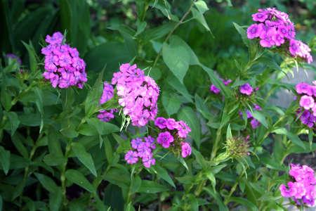 flowerses: gardens flowerses on lawn year solar daytime