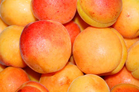 afters: beautiful ripe juicy apricots