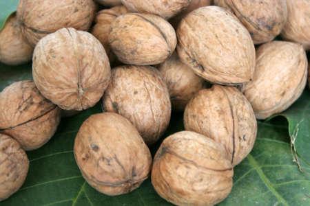green sheet tree and small quantity ripe nut Stock Photo - 3668116