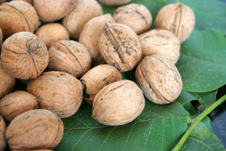 gentile: green sheet tree and small quantity ripe nut
