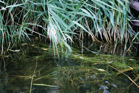 agruculture: river in encirclement of the green herb