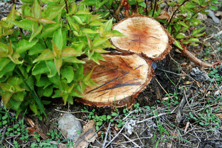 small hemps in wood Stock Photo - 3691343
