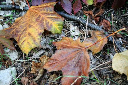 herb autumn solar daytime photo