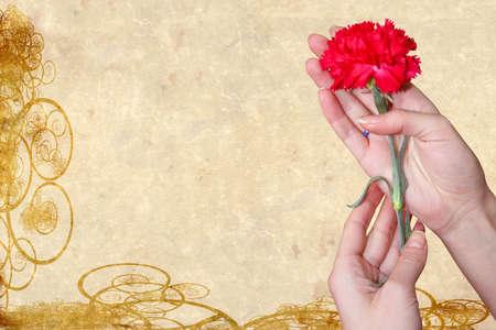 abstract scene carnation in feminine hand Stock Photo - 4149644
