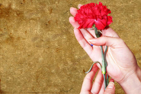 abstract scene carnation in feminine hand photo