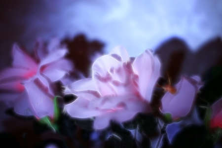 abstract scene of the decorative flower rose photo