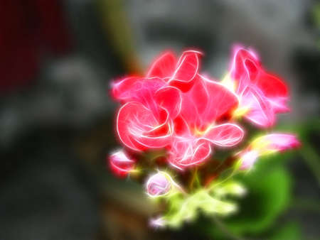 perforation: abstract background scene alive flower