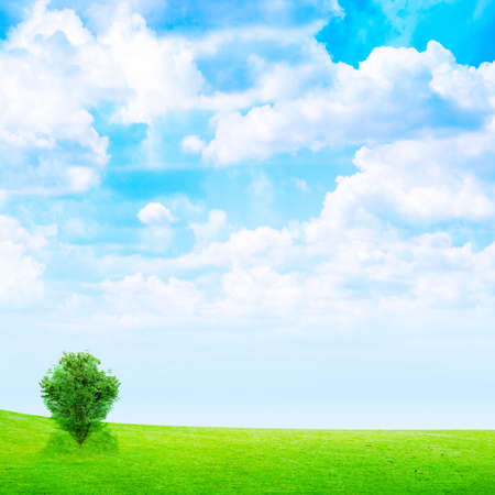 solitary tree on meadow under abstract brightly blue sky photo