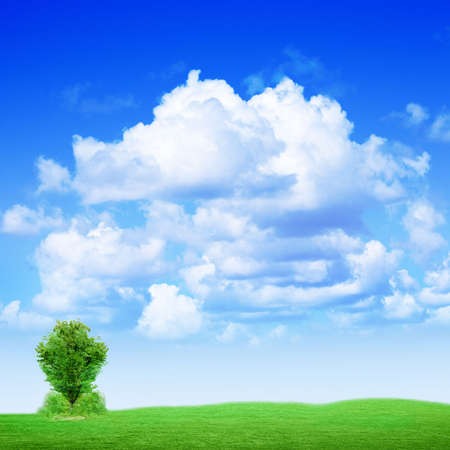 rural area: solitary tree on green meadow under abstract brightly blue sky Stock Photo