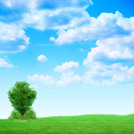 solitary tree on green meadow under abstract brightly blue sky photo