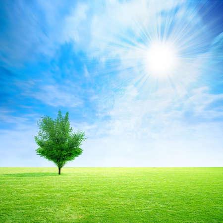 Astratto con prato verde su sfondo cielo Archivio Fotografico - 4309527