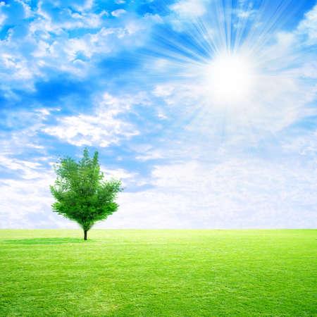 grassy meadow on background sky photo