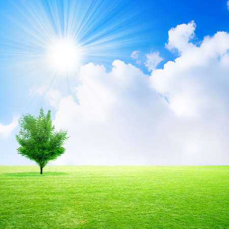 green meadow on background brightly shining sky photo