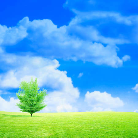 remote view: green meadow under beautiful year sky