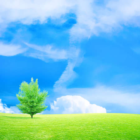 green meadow under beautiful year sky Stock Photo - 4260694