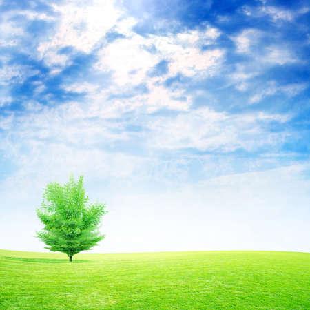 lea: scene green meadow under beautiful year sky