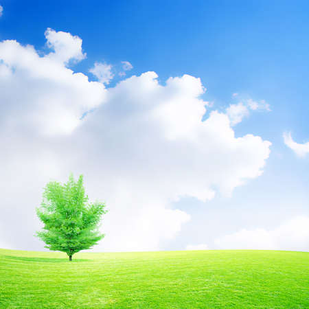 abstract scene meadow under beautiful year sky photo