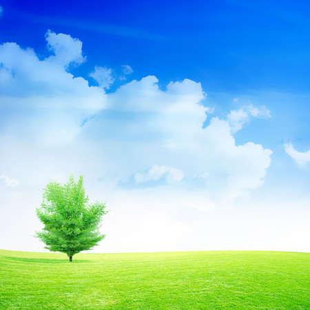 abstract scene green meadow under beautiful sky photo