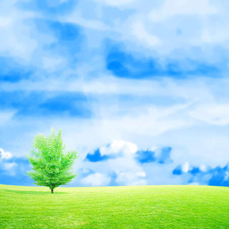scene green meadow under beautiful year sky photo