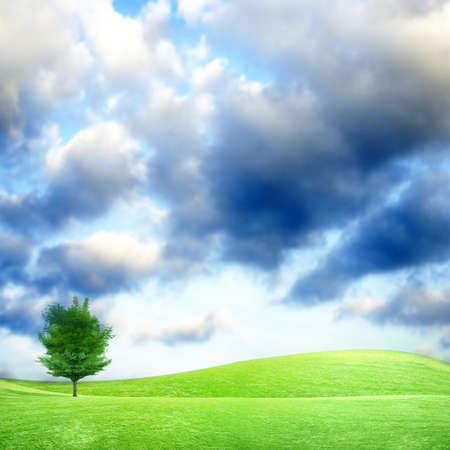 lea: herb on green meadow and beautiful sky Stock Photo