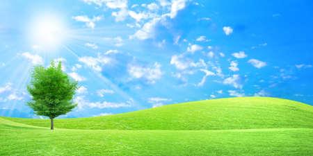 녹색 초원과 아름다운 하늘에 허브 스톡 콘텐츠