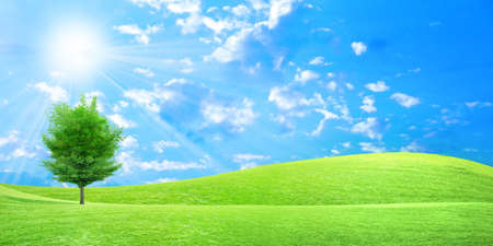 panoramic view: herb on green meadow and beautiful sky Stock Photo