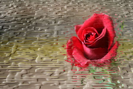 perforation: abstract background with aflower rose