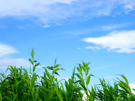 abstract vegetable landscape under blue sky Stock Photo - 4516497