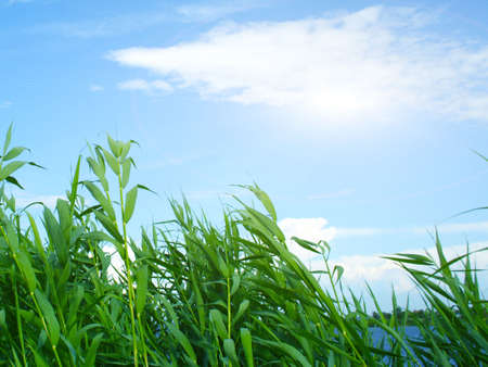 lea: abstract vegetable landscape under blue sky